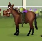 Jockey Shoots